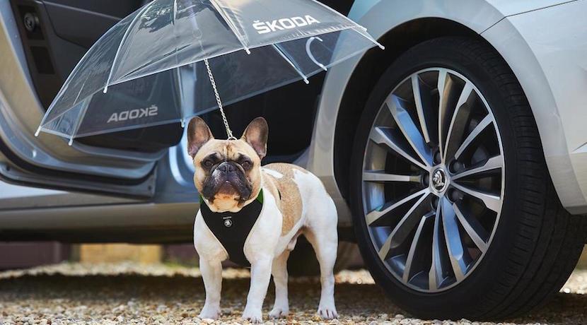 Skoda paraguas perro