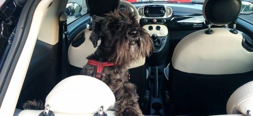 A veces hay que dejar al perro encerrado en el coche